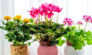 Порадуют глаз: рейтинг самых красивых комнатных цветов для настоящих эстетов
