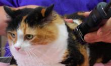 Салонные процедуры для кошек: рейтинг лучших машинок для стрижки 2020 года
