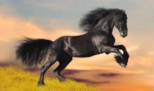 Истинное воплощение грации: рейтинг самых красивых пород лошадей