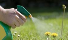 Вырастет не только бурьян: рейтинг лучших гербицидов или средств от сорняков и травы 2021 года