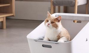 Поддерживайте чистоту в доме: рейтинг лучших наполнителей для кошачьего туалета