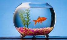 Рейтинг лучших грунтов для аквариума в 2020 году, максимально подходящих для формирования подводного рельефа