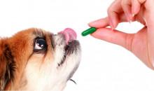Рейтинг лучших витаминов для собак различных пород на 2020 год