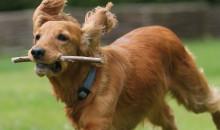 Рейтинг самых красивых пород маленьких и больших собак