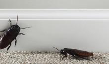 Рейтинг лучших средств от тараканов по мнению пользователей