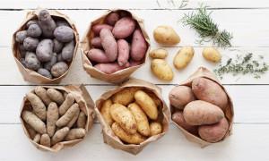 Будет что покушать: рейтинг лучших сортов картофеля для средней полосы