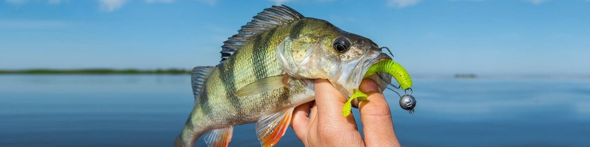 Секрет удачной рыбалки, правильно подобранная приманка: рейтинг лучших силиконовых приманок для рыбалки