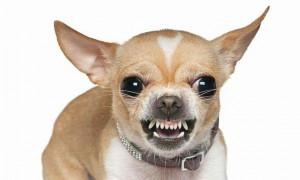 Будьте осторожны: рейтинг самых агрессивных пород собак