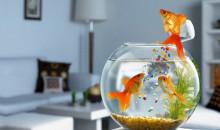 Молчаливые питомцы: рейтинг лучших аквариумных рыбок для новичка