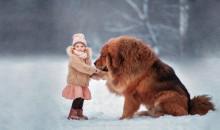 Уникальные питомцы: рейтинг самых дорогих пород собак
