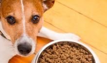 Рейтинг самых лучших собачьих кормов для желающих побаловать своего питомца