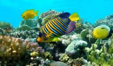 Рейтинг самых красивых рыб в мире для любителей морских обитателей