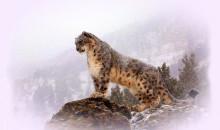 Натуральность во всей красе: рейтинг самых красивых животных мира с фото и описанием