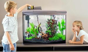 Как очищать воду и насыщать её кислородом: рейтинг лучших внутренних фильтров для аквариума 2020 года