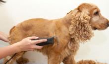 Шерсть питомца должна быть в порядке: рейтинг лучших машинок для стрижки собак 2020 года по отзывам покупателей