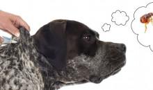 Не оставляйте паразитам шансов: рейтинг лучших капель 2020 года от блох для собак