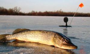 10 лучших жерлиц для рыбалки: рейтинг 2020 года