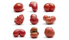 Пора на огород: рейтинг лучших сортов помидоров (томатов) для посадки на даче