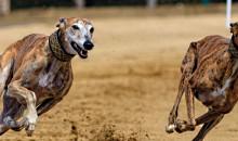 Рейтинг самых быстрых пород собак: выбор настоящих ценителей