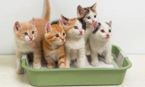 Рейтинг лучших туалетов (лотков) для кошек 2020 года для тех, кто содержит в своём доме пушистых питомцев