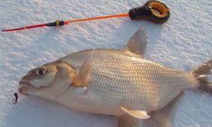 Ловись рыбка большая и маленькая: рейтинг лучших мормышек для рыбалки 2021 года
