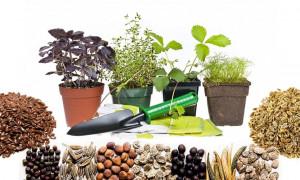 Для сада и огорода: рейтинг лучших интернет-магазинов семян и саженцев 2021 года