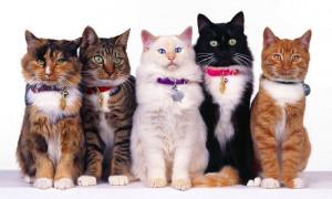 Милейшие создания: рейтинг самых популярных пород кошек