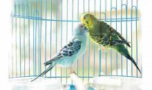 Чтобы птице было комфортно: рейтинг лучших клеток для попугаев в 2020 году