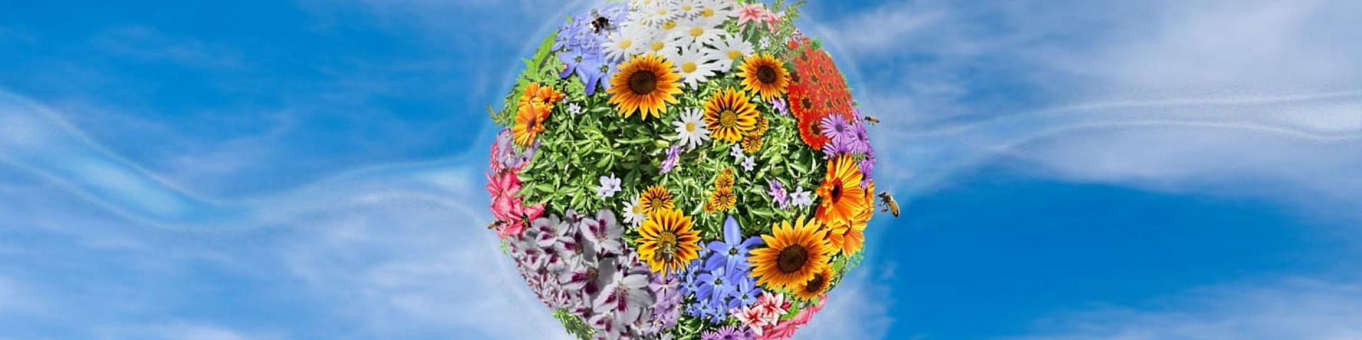 Мёд для глаз: рейтинг самых красивых цветов в мире