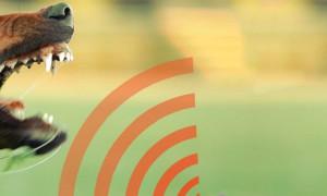 Рейтинг лучших отпугивателей собак 2020 года по мнению пользователей