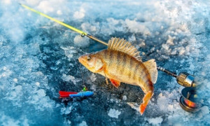 Ловись рыбка маленькая и большая: рейтинг лучших балансиров на окуня для хорошего улова