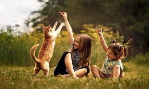 Пушистая радость: рейтинг лучших пород кошек для детей